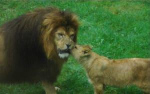 Freunde finden in Berlin Zoo Tiergarten Berlin